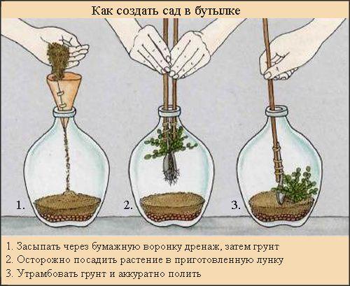 Сад в бутылке 1354740338_butylochnye_sady_2
