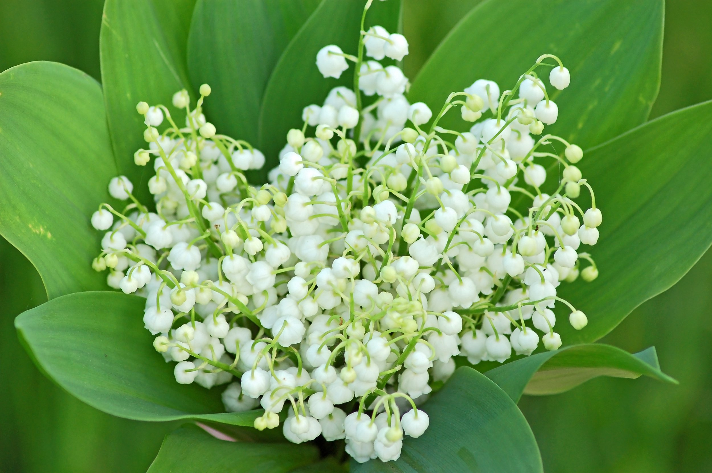 Mai, joli mois de mai Hellen-sergeyeva-fotolia.com_