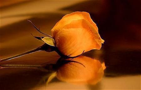 Para los caballeros solamente.... 20070113194540-20051110073310-rosa-amarilla