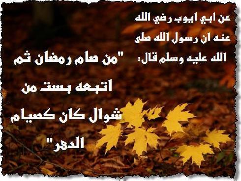انوار رمضان1437هـ  1373694317861