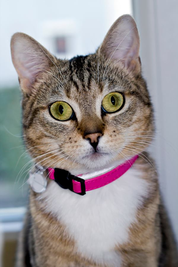 Wir suchen ein neues Zuhause (Katzen) - Seite 5 10090329nd