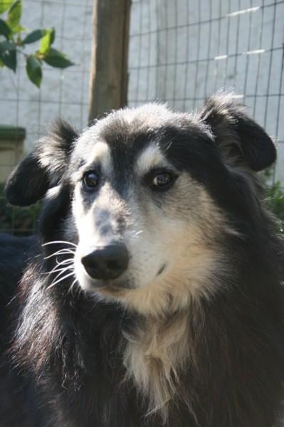 Hunde aus Italien suchen dringend Plätze!!! Ein ganzes Leben im Canile! - Seite 6 10131555ge