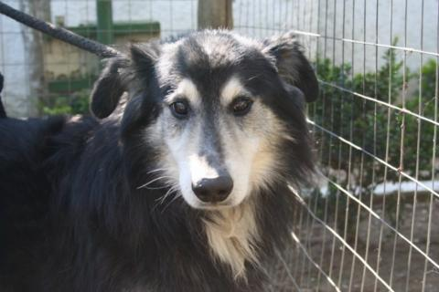 Hunde aus Italien suchen dringend Plätze!!! Ein ganzes Leben im Canile! - Seite 6 10131556vl