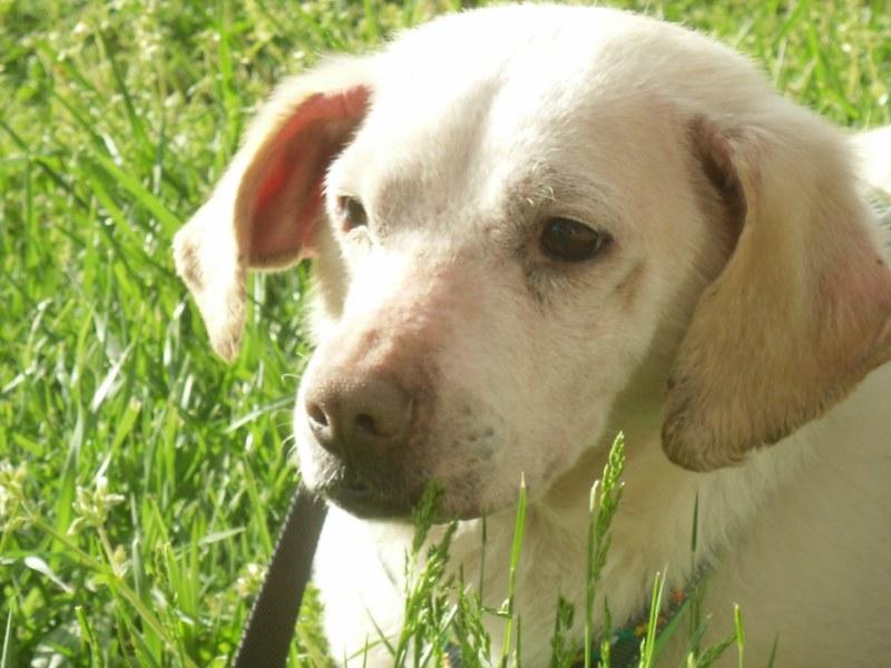 Hunde aus Italien suchen dringend Plätze!!! Ein ganzes Leben im Canile! - Seite 4 10271669qw
