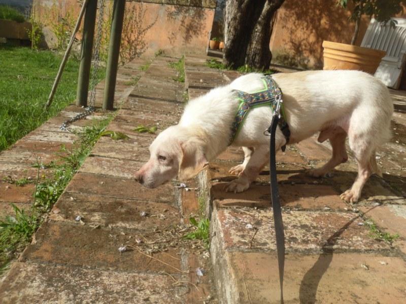 Hunde aus Italien suchen dringend Plätze!!! Ein ganzes Leben im Canile! - Seite 4 10271671du