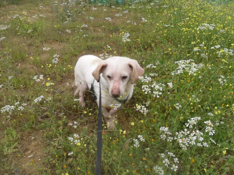 Hunde aus Italien suchen dringend Plätze!!! Ein ganzes Leben im Canile! - Seite 4 10271673xb