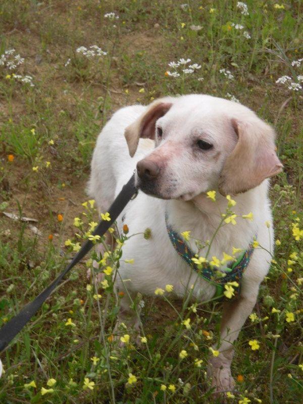 Hunde aus Italien suchen dringend Plätze!!! Ein ganzes Leben im Canile! - Seite 4 10271674rq