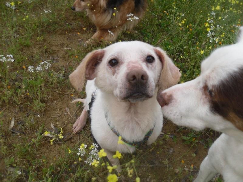 Hunde aus Italien suchen dringend Plätze!!! Ein ganzes Leben im Canile! - Seite 4 10271676nf