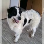 Hunde aus Italien suchen dringend Plätze!!! Ein ganzes Leben im Canile! - Seite 4 10387011gp