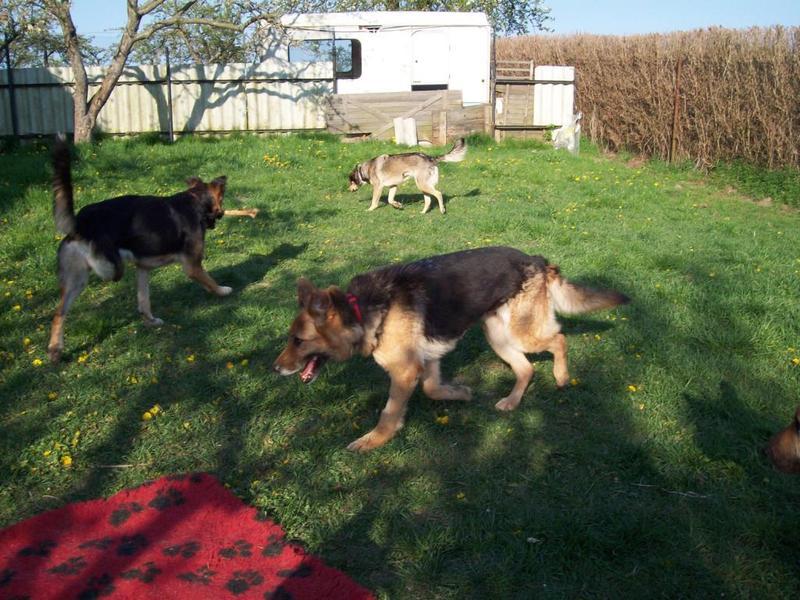 Hunde aus Italien suchen dringend Plätze!!! Ein ganzes Leben im Canile! - Seite 4 10390524pa