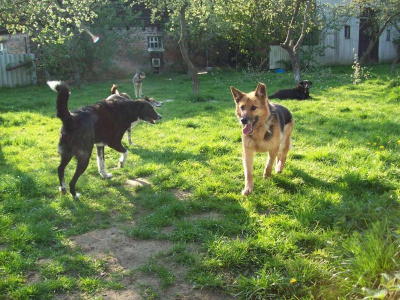 Hunde aus Italien suchen dringend Plätze!!! Ein ganzes Leben im Canile! - Seite 4 10390525wx