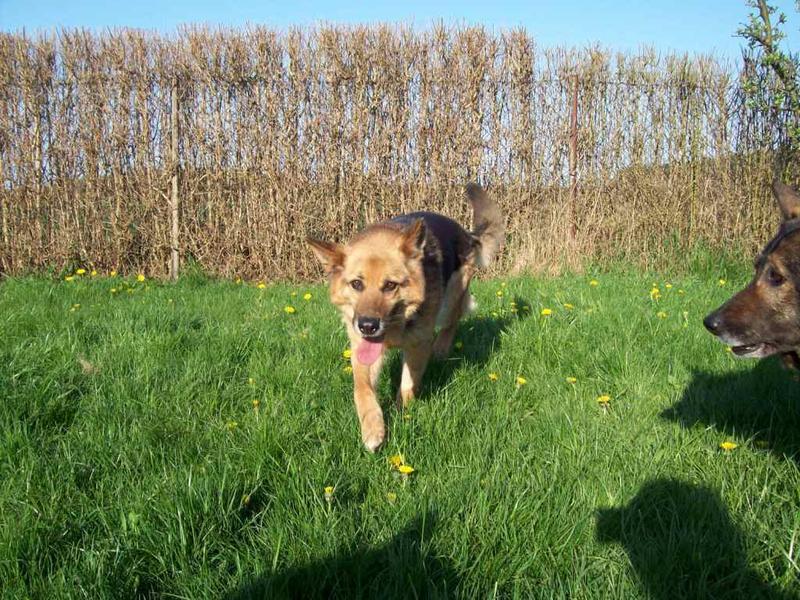Hunde aus Italien suchen dringend Plätze!!! Ein ganzes Leben im Canile! - Seite 4 10390529io