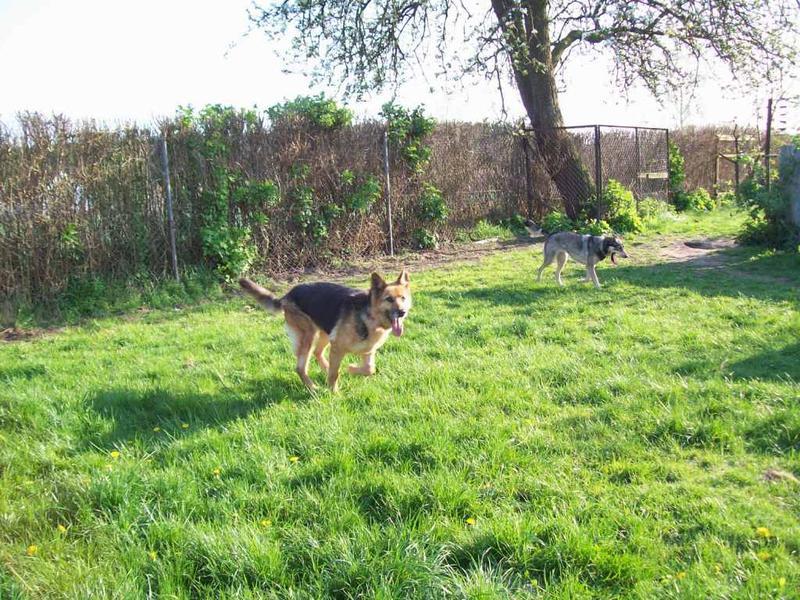 Hunde aus Italien suchen dringend Plätze!!! Ein ganzes Leben im Canile! - Seite 4 10390531lk