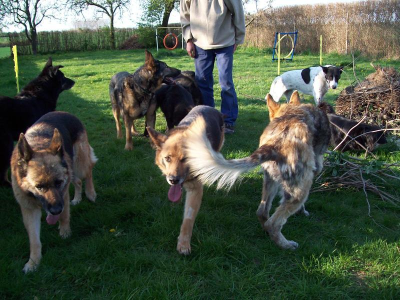 Hunde aus Italien suchen dringend Plätze!!! Ein ganzes Leben im Canile! - Seite 4 10390533ir