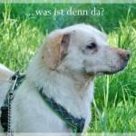 Hunde aus Italien suchen dringend Plätze!!! Ein ganzes Leben im Canile! - Seite 5 10462203kg