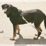 Hunde aus Italien suchen dringend Plätze!!! Ein ganzes Leben im Canile! - Seite 5 10502666bv