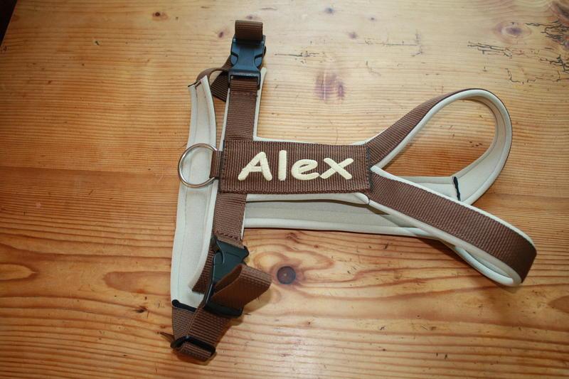 Alex - auf Umwegen ins Glück - vermittelt 10588902kr