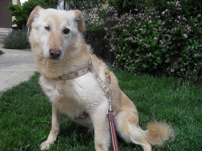 Hunde aus Italien suchen dringend Plätze!!! Ein ganzes Leben im Canile! - Seite 5 10824737io