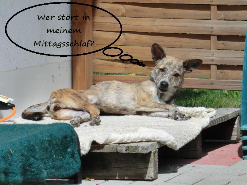 Trotz Behinderung ein kleiner Sonnenschein - jetzt im Gnadenhof zuhause - Seite 3 12104134um