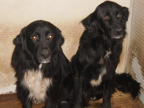 Die vergessenen Hunde von Stroncone - Seite 2 12264457xf