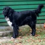 Die vergessenen Hunde von Stroncone - Seite 2 12264458pg