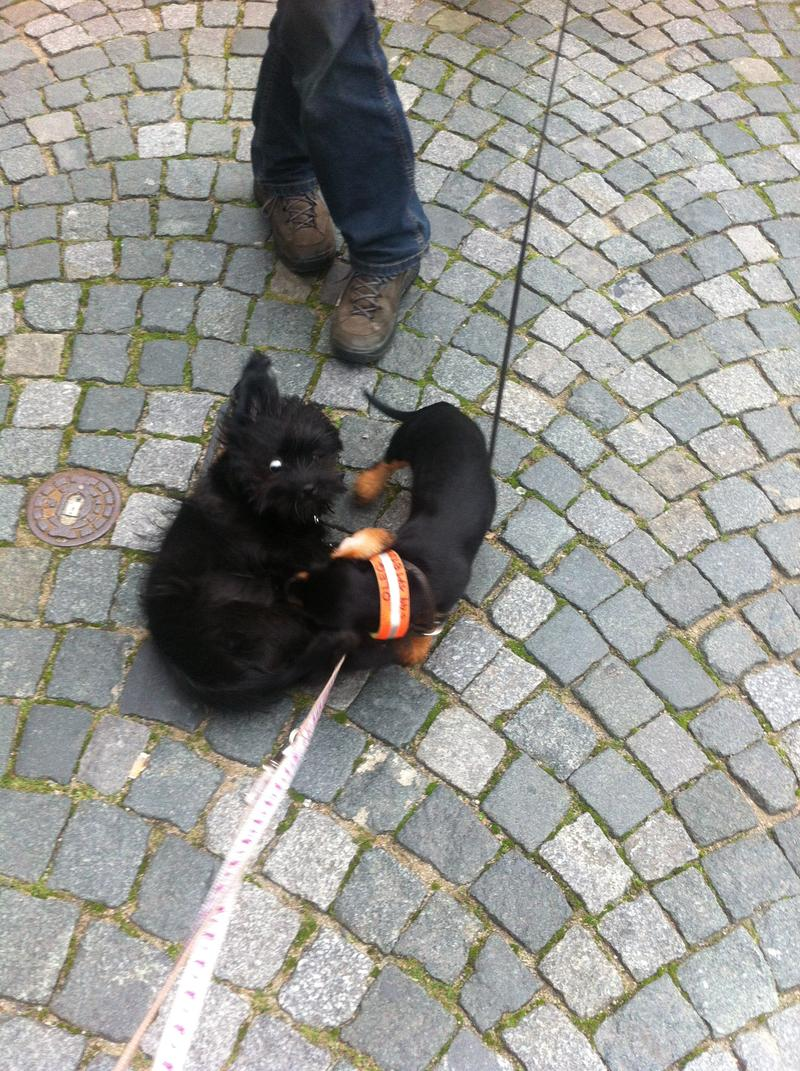 Dzuli - Rennflokati - Endstation in Hattingen  ♥♥♥♥♥ - Seite 3 12294569eb