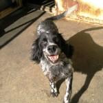 6 Hunde, fast ein Leben lang im italienischen Canile 12489878hg