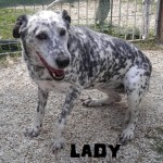 6 Hunde, fast ein Leben lang im italienischen Canile 12499882sr