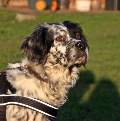 Bildertagebuch - Ginger lebt jetzt als Dauerpflegehund bei ihrer Pflegefamilie 12564136gq