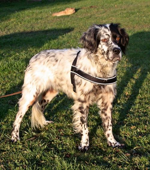 Bildertagebuch - Ginger lebt jetzt als Dauerpflegehund bei ihrer Pflegefamilie 12564137ns