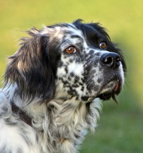 Bildertagebuch - Ginger lebt jetzt als Dauerpflegehund bei ihrer Pflegefamilie 12564140zj