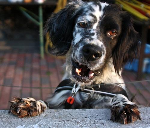 Bildertagebuch - Ginger lebt jetzt als Dauerpflegehund bei ihrer Pflegefamilie 12564143qn