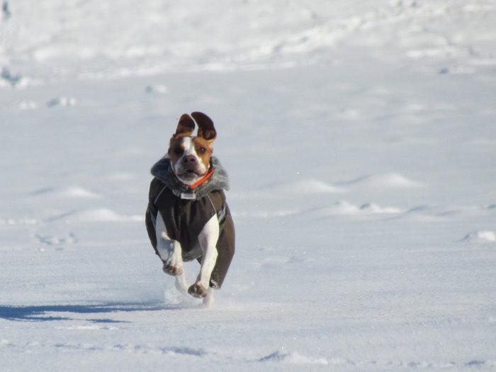 Winterspaziergang mit Bella 12798442kn