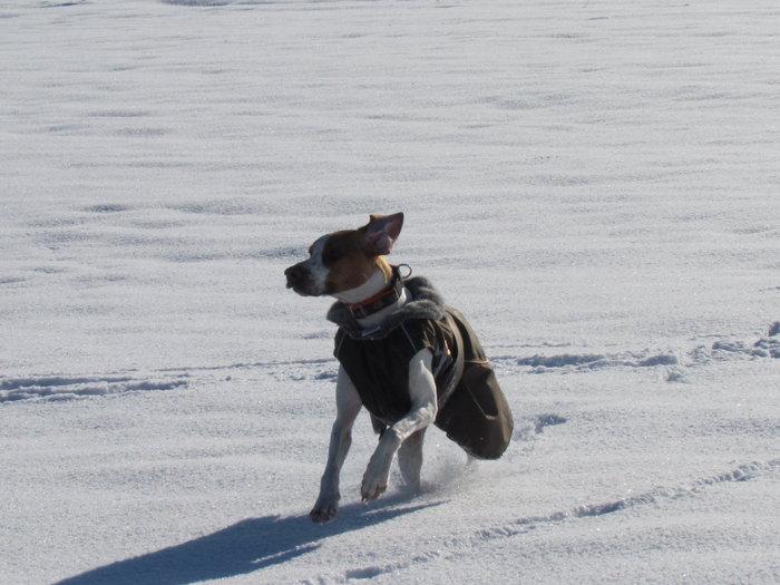 Winterspaziergang mit Bella 12798453ic