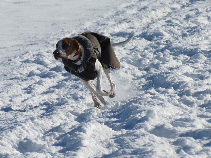 Winterspaziergang mit Bella 12798467lg