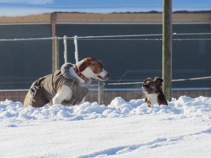 Winterspaziergang mit Bella 12798468ig