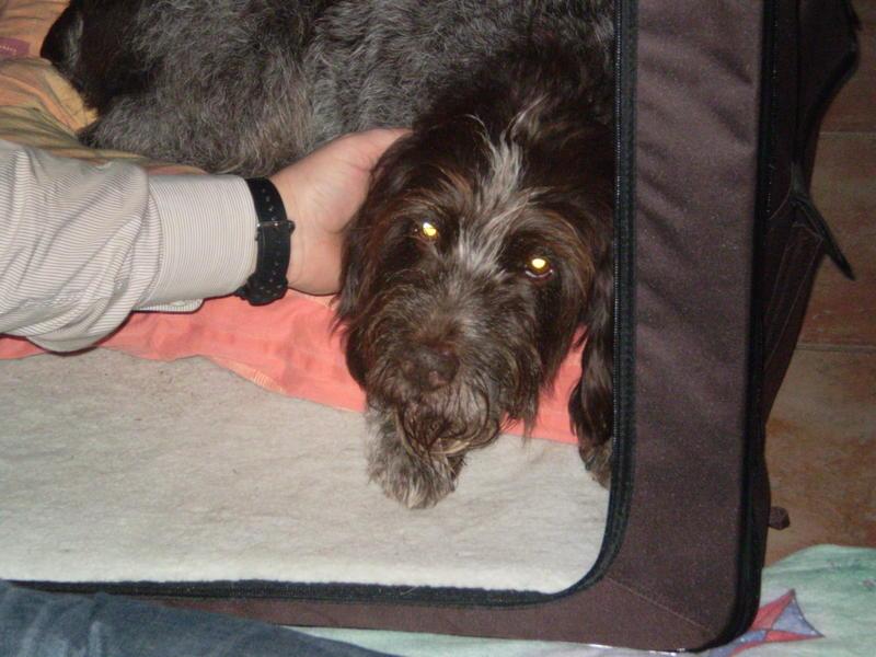 Zwei Hundeopis aus Frankreich suchen ganz dringend einen Platz - Seite 2 12814920yc