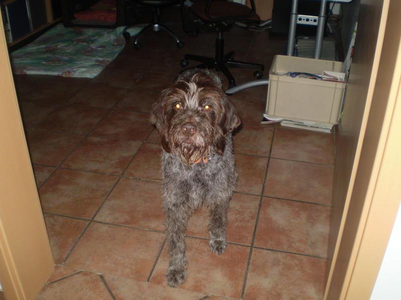 Zwei Hundeopis aus Frankreich suchen ganz dringend einen Platz - Seite 2 12814922nk