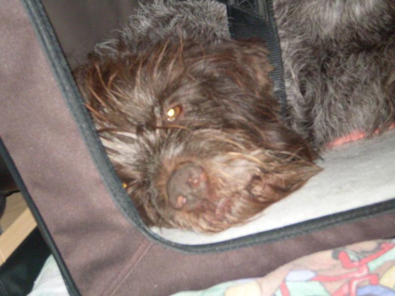 Zwei Hundeopis aus Frankreich suchen ganz dringend einen Platz - Seite 2 12814923bf