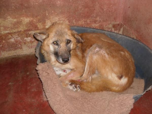 Hunde aus Italien suchen dringend Plätze!!! Ein ganzes Leben im Canile! - Seite 14 13017356qw