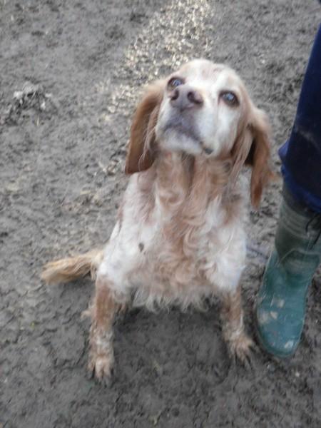 Hunde aus Italien suchen dringend Plätze!!! Ein ganzes Leben im Canile! - Seite 14 13038989oq