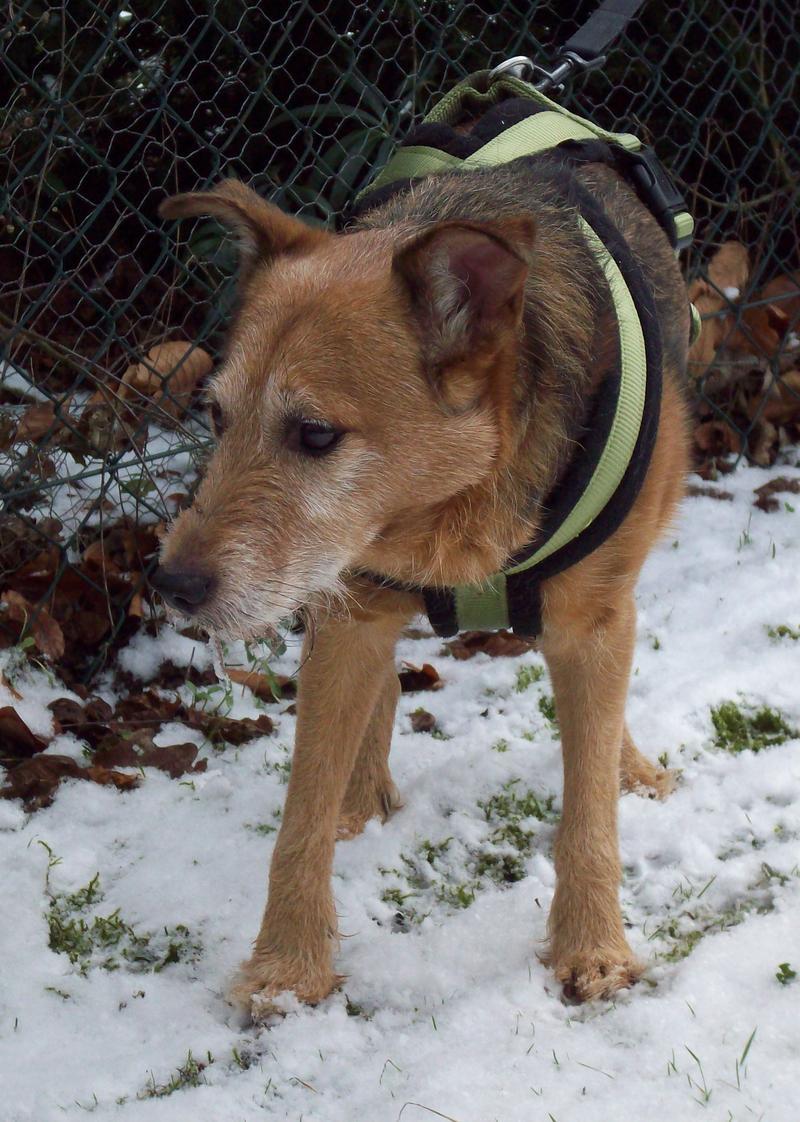 Jack - Hundeopa - Terrier - knapp 14 Jahre 13402334pg