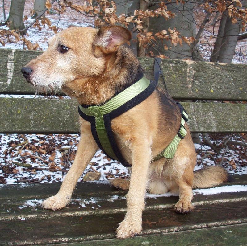 Jack - Hundeopa - Terrier - knapp 14 Jahre 13402374hl