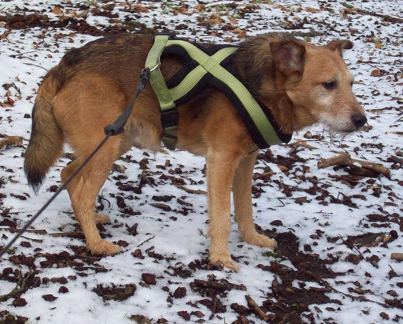 Jack - Hundeopa - Terrier - knapp 14 Jahre 13402386kt