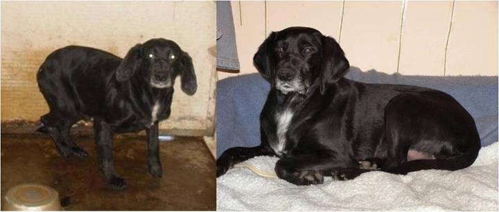 Hunde aus Italien suchen dringend Plätze!!! Ein ganzes Leben im Canile! - Seite 16 13402544ut
