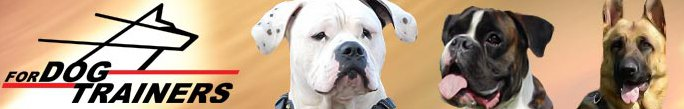 französische bulldogge mops forum - Das kleine Bullyforum - Portal 13409632xi
