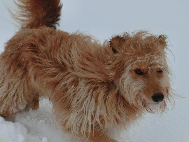 Die Trulla liebt den Schnee 13569126ij