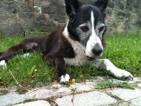 18 jährige Hunde-Omi sucht dringend ein Plätzchen 13572709lz