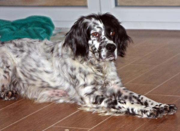 Bildertagebuch - Ginger lebt jetzt als Dauerpflegehund bei ihrer Pflegefamilie 13730312ha
