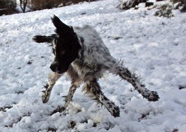 Bildertagebuch - Ginger lebt jetzt als Dauerpflegehund bei ihrer Pflegefamilie 13730313dh